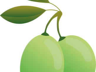 olives-1166333_640